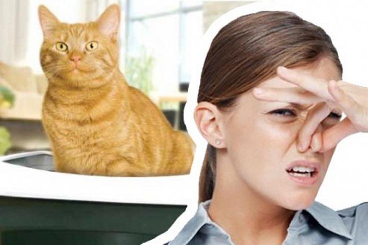 Запах мочи домашних животных в Коломне