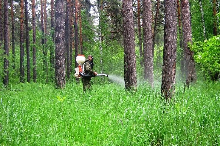 Обработка от клещей лесных массивов в Коломне